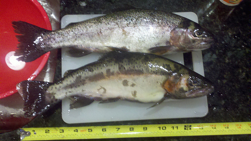 two trout